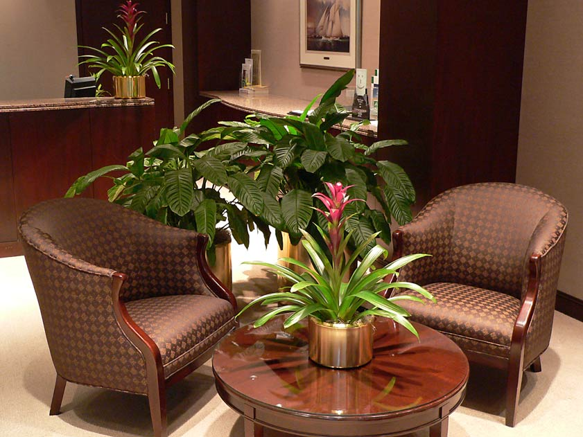 Plant leasing and plant rental for interior decor